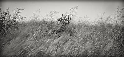 Tallgrass Whitetail Art Print