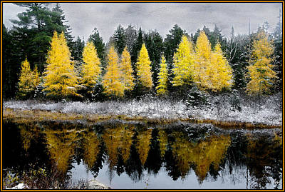 Photograph - Tamarack Dreams by Wayne King