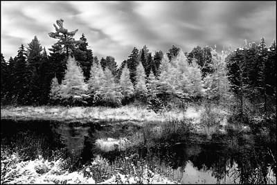 Photograph - Tamarack Under A Platinum Sky  by Wayne King