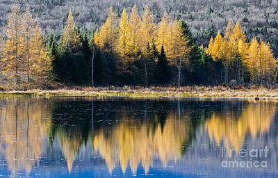 Photograph - Tamarack Reflections by Alan L Graham