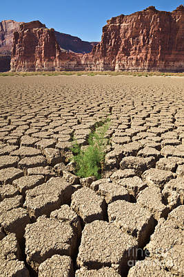A New Beginning Photograph - Tamarisk In Dry Colorado River by Yva Momatiuk John Eastcott