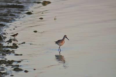 Sandpiper Digital Art - Tampa Bay Wildlife by Bill Cannon