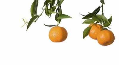 Tangerines On Branch Art Print by Anna Kaminska