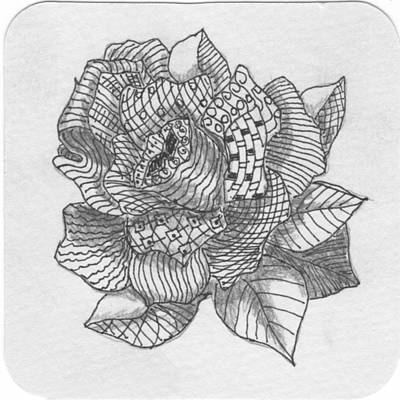 Drawing - Tangle Rose 2 by Quwatha Valentine