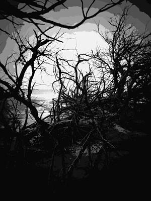 Photograph - Tangled Beach In Black by Sheri McLeroy