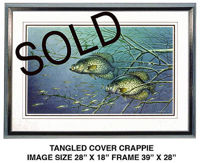 Panfish Painting - Tangled Cover Crappie by Jon Q Wright