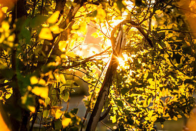 Photograph - Tangled Flare by Melinda Ledsome