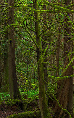 Art Print featuring the photograph Tangled Forest by Jacqui Boonstra
