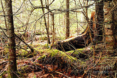 Tree Roots Photograph - Tangled Forest by Larry Ricker