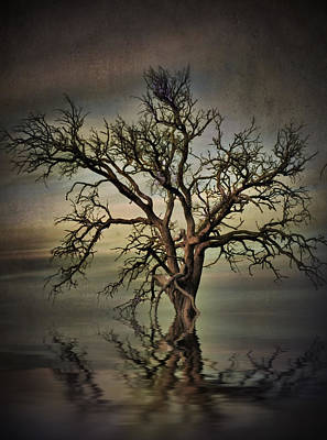 Photograph - Tangled Limbs by Kym Clarke