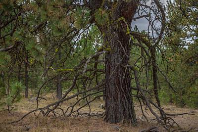 Photograph - Tangled Limbs by Ryan Heffron