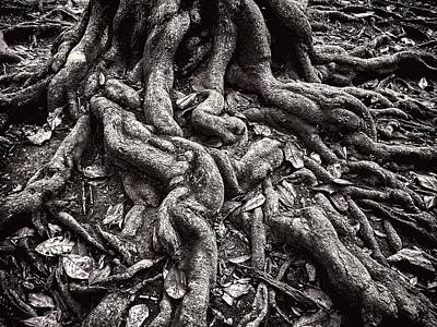 Photograph - Tangled Roots by Robert Knight
