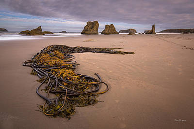 Tangled.... Bandon Oregon Art Print