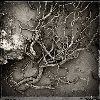 Photograph - Tangled by Tim Nichols