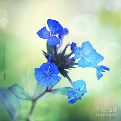 Photograph - Tangled Up In Blue by Linda Lees