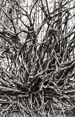 Painting - Tangled Wood by Gregory Dyer