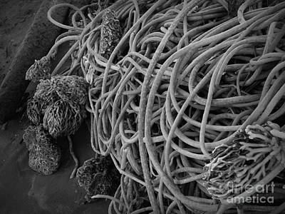 Photograph - Tangles Of Seaweed 2 Bw by Chalet Roome-Rigdon