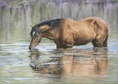 Wild Horses Drawing - Tango On The Salt River by Helen Bailey