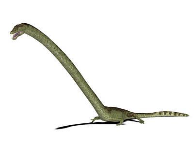 Triassic Photograph - Tanystropheus Prehistoric Marine Reptile by Friedrich Saurer