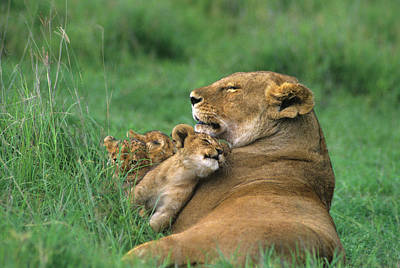 Caring Mother Photograph - Tanzania, Ngorongoro Crater by Jaynes Gallery