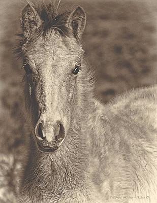 Mixed Media - Taos Pony by Charles Muhle