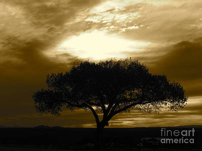 Photograph - Taos Tree by LeLa Becker