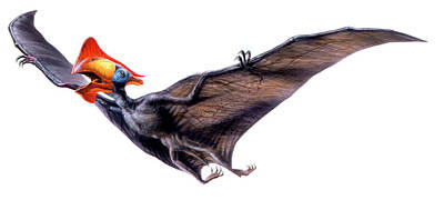 Flying Dinosaur Photograph - Tapejara Pterosaur by Deagostini/uig