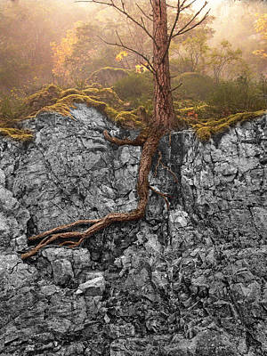 Tree Roots Photograph - Taproot by Mary Jo Allen