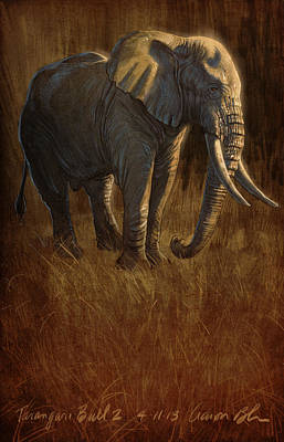 Drawing Digital Art - Tarangire Bull 2 by Aaron Blaise