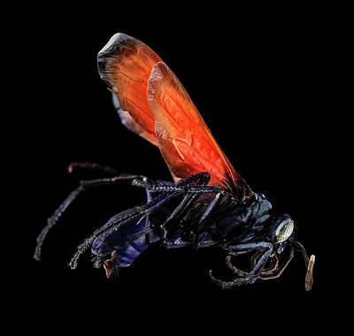 Tarantula Photograph - Tarantula Hawk by Us Geological Survey