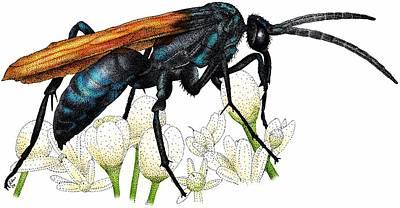 Photograph - Tarantula Hawk Wasp by Roger Hall