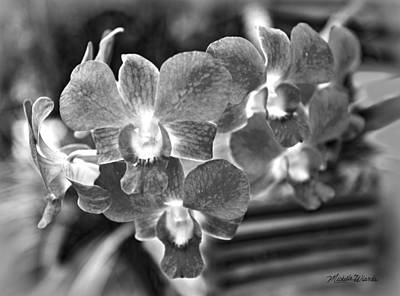 Photograph - Taras Orchids On A Rainy Afternoon by Michelle Constantine