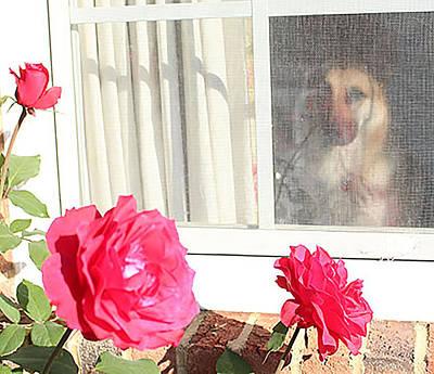 Tara's Rosey Window Original by Linda Ritlinger