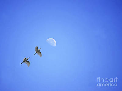 Aim High Photograph - Target Higher by Image World