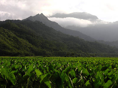 Photograph - Taro Fields Kauai by Robert Lozen