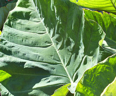 Photograph - Taro Plant Leaf Upclose by Duane McCullough
