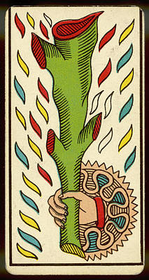 Tarot Drawing - Tarot Card  - As De Baton (ace Of Clubs) by Mary Evans Picture Library