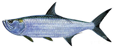 Blue Marlin Painting - Tarpon by Carey Chen