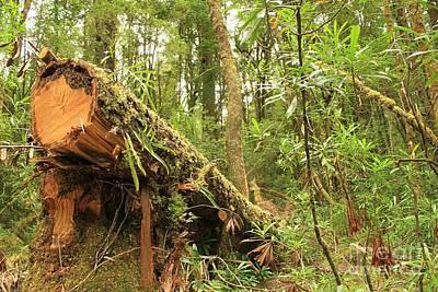 Tasmanian Rain Forest All Profits Go To Hospice Of The Calumet Area Art Print