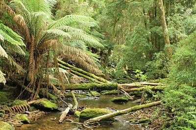 Tasmanian Rain Forest River All Profits Go To Hospice Of The Calumet Area Art Print