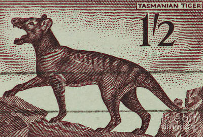Tasmanian Tiger Vintage Postage Stamp Art Print by Andy Prendy