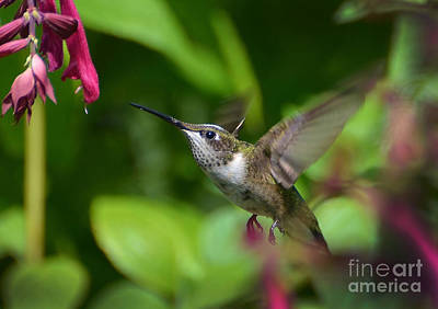 Photograph - Taste Nature's Sweetness by Kathy Baccari