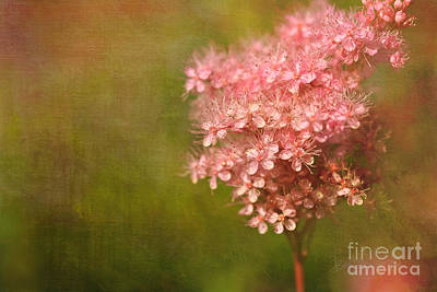 Bloosom Photograph - Taste Of Summer by Beve Brown-Clark Photography