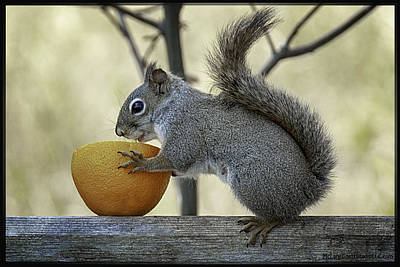 Photograph - Tasty Orange Bowl Of Love by LeeAnn McLaneGoetz McLaneGoetzStudioLLCcom