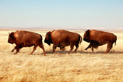 Of Animals Photograph - Tatanka by Todd Klassy