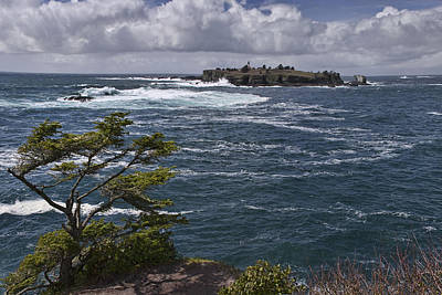 Photograph - Tatoosh Island by Wes and Dotty Weber