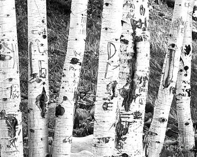 Birch Bark Photograph - Tattoo Trees by Rebecca Margraf