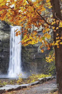 Taughannock Falls And Maple Art Print