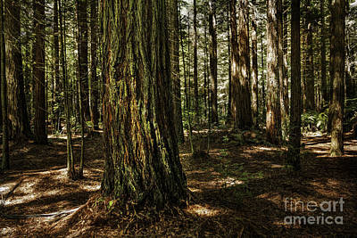 Photograph - Tauranga Forest by Barbara Youngleson