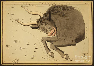 Photograph - Taurus Constellation Zodiac Sign 1825 by Science Source